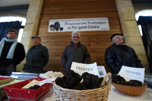 Des vendeurs de truffes sur le marché aux truffes, le 27 novembre 2017 à Sainte-Alvere (près de Bordeaux, sud-ouest) © MEHDI FEDOUACH AFP/Archives