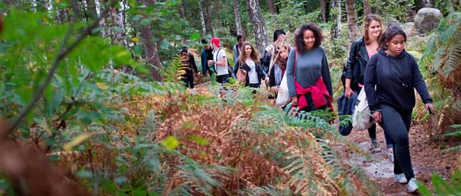 Objectif des travaux dans la forêt de Fontainebleau : lui rendre son apparence d'il y a un peu moins de deux siècles.