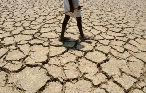 De Madagascar à l'Amazonie et jusque dans les Grandes plaines américaines, le dérèglement climatique pourrait menacer entre un quart et la moitié des espèces d'ici 2080 dans 33 régions du monde parmi les plus riches en biodiversité, selon un rapport © Noah SEELAM AFP/Archives