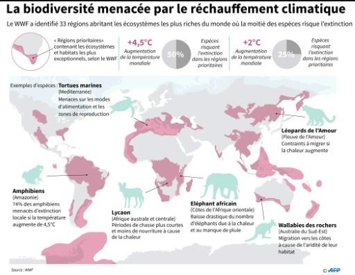 La biodiversité menacée par le réchauffement climatique © Nick Shearman AFP