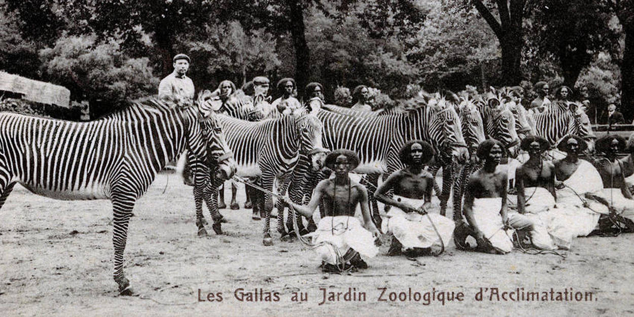 Zoos Humains Dans La Tete Des Trafiquants D Hommes Le Point