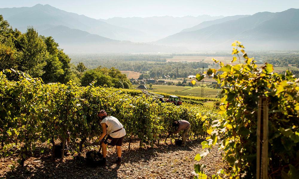 Fermage. Ce sont souvent de jeunes vignerons qui font appel aux GFV, pour continuer à exploiter l'intégralité d'un domaine malgré les droits de succession.