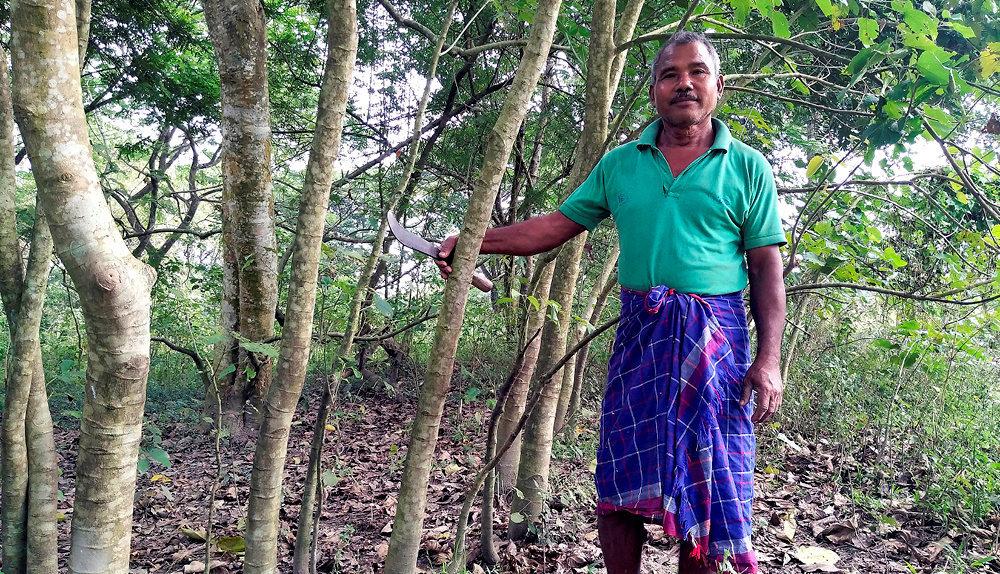 Héros du quotidien. Jadav «Molaï» (Forêt) Payeng dans l'île d'Aruna Sapori, sur leBrahmapoutre. Enquarante ans, il a donné vie à une jungle qui s'étend sur550hectares.