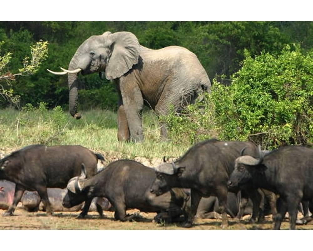 Des animaux dans le parc de Virunga ©  DR