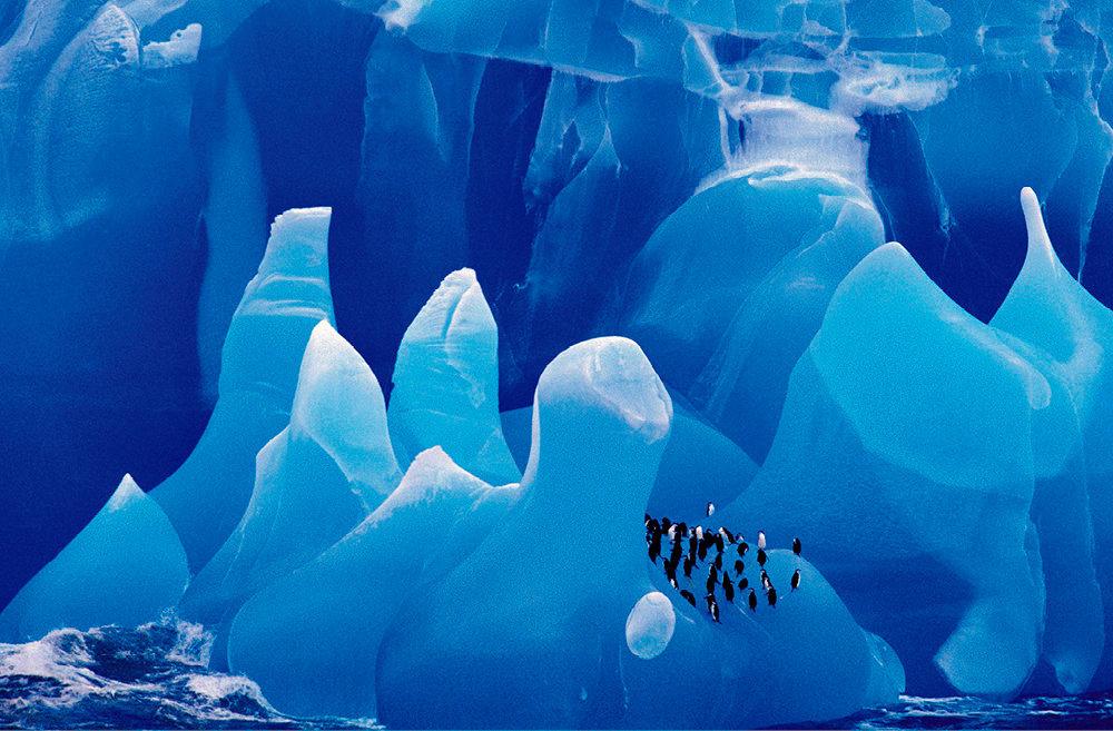 Réchauffement. Fonte des icebergs enAntarctique, habitat des manchots à jugulaire.