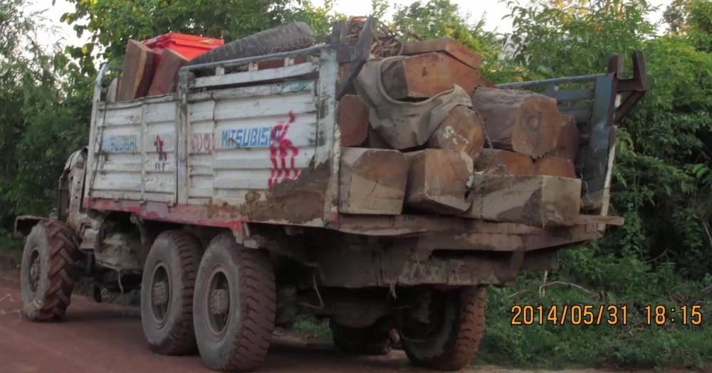 trafic de bois ©  CHRTF