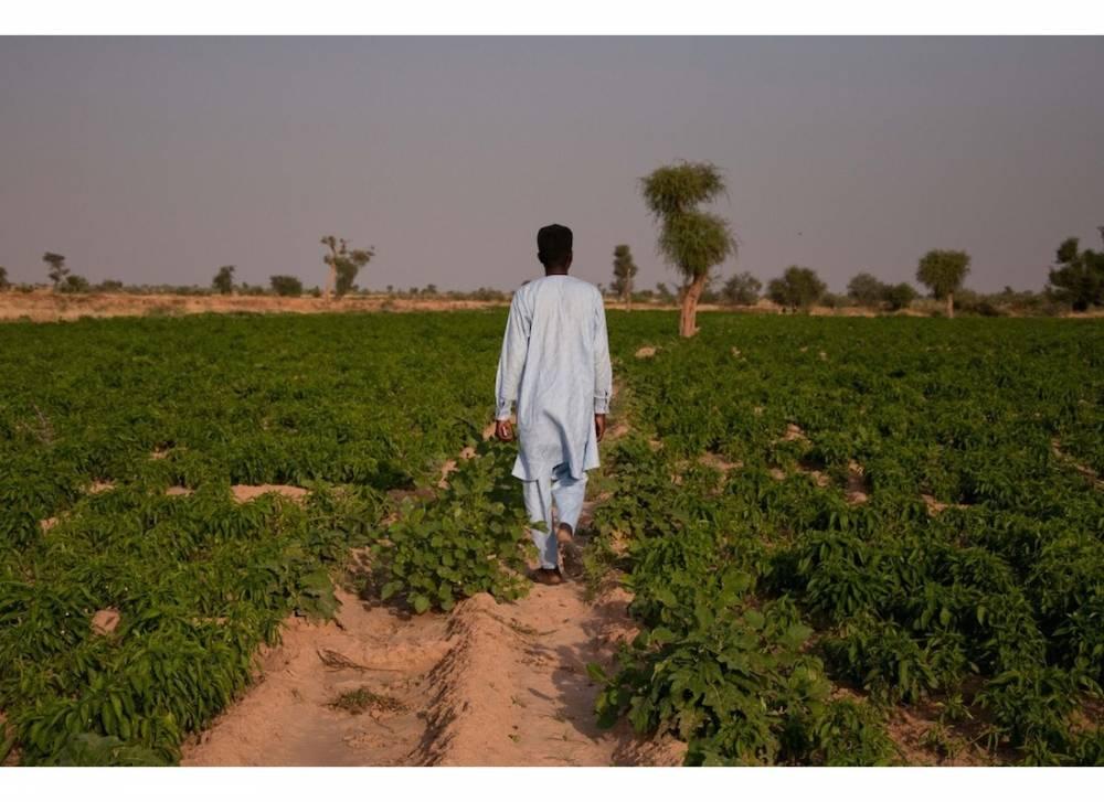 Ibrahim Chetima dans les cultures de poivrons, Diffa. ©  Morgane Wirtz