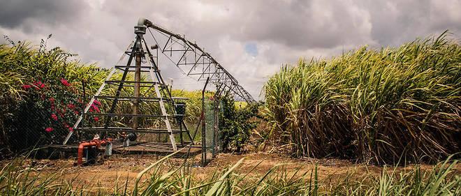 La canne à sucre fait aujourd'hui partie des sources d'énergies renouvelables de l'île Maurice.