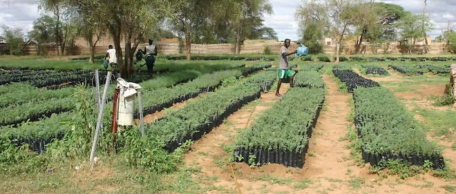 Parmi les expériences à suivre, ces pépinières où sont cultivés les jeunes plants de la Grande muraille verte Sénégalaise.