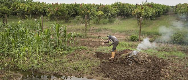 Les jeunes Africains se détournent de plus en plus de l'agriculture.