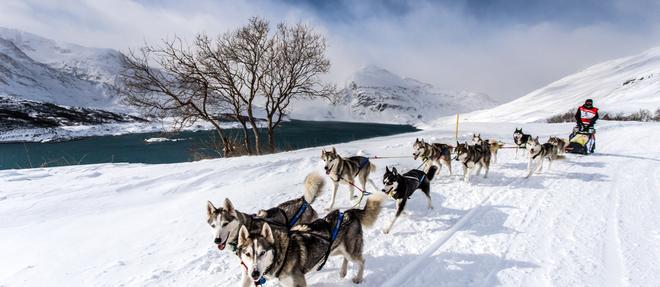 La Grande Odyssée Savoie Mont Blanc,l'événement annuel du chien de traîneau en Europe.