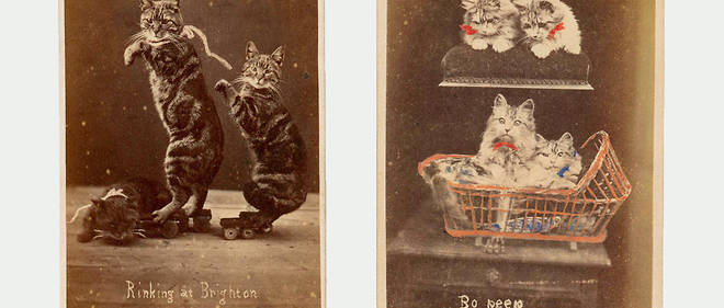 Deux images issues de la serie << Brighton Cats >>, de Harry Pointer (1822-1899).