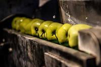 Lavage de pommes avant qu'elles ne soient broyées et pressées pour en extraire leur jus.