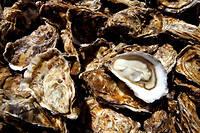 L'ouverture des huîtres peut virer au cauchemar. Jean-François Piège vous donne tous ses conseils.  ©Philippe Roy