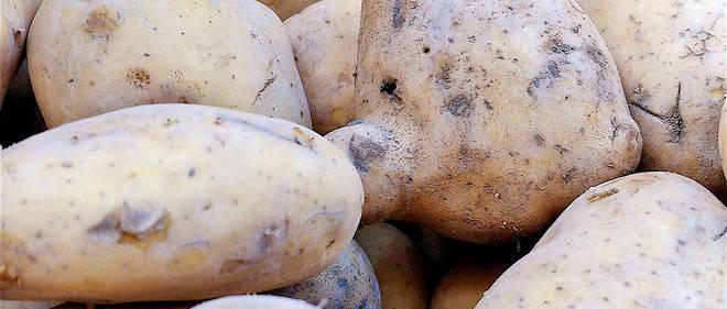 Pommes de terre au marché 20/10/2017