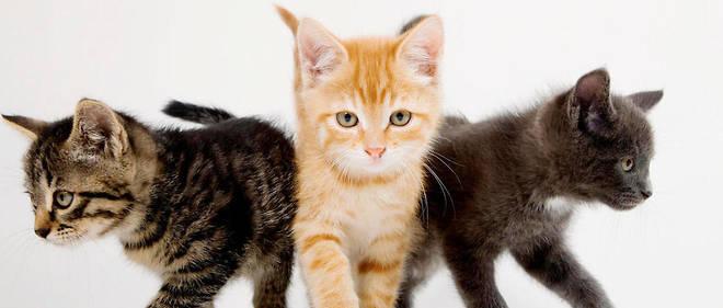 """Résultat de recherche d'images pour """"image de chats"""""""