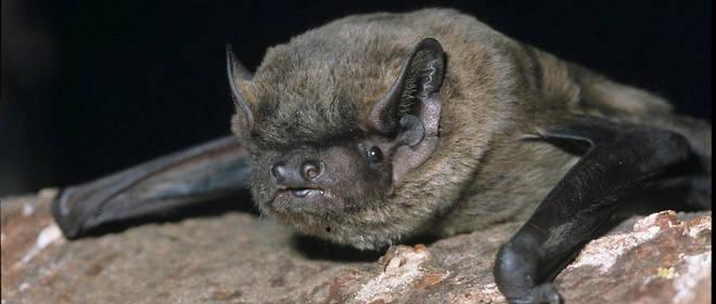 Un numéro d'étudiant a été attribué à l'animal : il correspond à la date de la première apparition de Batman chez DC Comics.