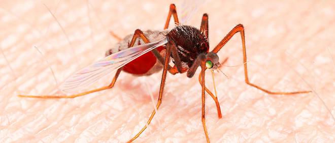 Durant l'étude, les cas de paludisme infantile auraient diminué de 20 %.