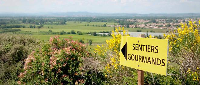 Agenda du vin – Sentiers gourmands en Clape vigneronne