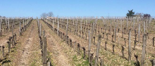 Paysage de Pomerol, vignoble du Bordelais.