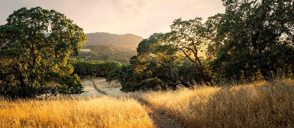 On retrouve dans le parc regional de la vallee de Sonoma une atmosphere de Toscane decrite par de nombreux voyageurs. (C)Taylor Glenn/Vault Archives-REA