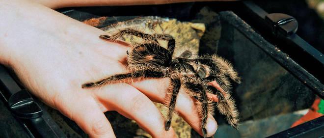 En revanche, se laisser piquer par une araignée pour devenir Spider-Man n'est pas forcément une bonne idée...