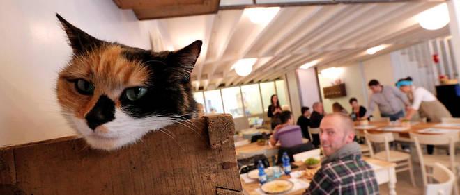 Au Miagola Caffè, un bar à chats ouvert depuis 2014 à Turin (Italie).