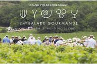 Le 7 juillet prochain aura lieu la balade gourmande de Ladoix,  première épopée œnotouristique française. Découvrir ce vignoble au pied  de la colline de Corton.