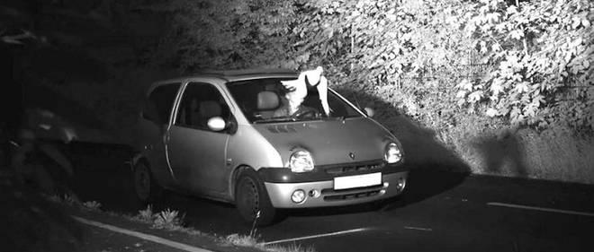 La colombe a surgi et dissimulé le visage de l'automobiliste en infraction.