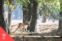Isabella Tree et Charlie Burrell ont entrepris d'introduire sur leur domaine des cerfs, des poneys, des bovins a longues cornes et une race de cochon ancienne. Tous ces animaux evoluent librement sur le domaine et se reproduisent dehors avec le minimum d'intervention humaine.