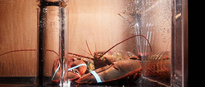 Fichu homard qui suffit à renvoyer les politiques à leur image de goinfre sans foi ni loi, plus avide de se servir qu'attaché à servir.
