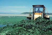 En 2007, année où a été publié cet article, la Bretagne investissait 600 000 euros par an dans le déblaiement des algues vertes.