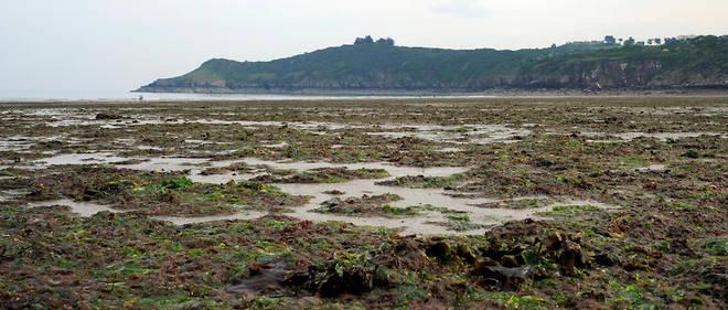 Deux associations avaient pointé du doigtavoir « un vaste espace vaseux recouvert par une nappe continue d'algues vertes» sur le site concerné. Image d'illustration.