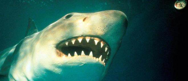 Le requin qui a fait peur a des millions de (tele)spectateurs.
