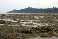 Six plages bretonnes et une plage normande ont été fermées depuis le début du mois de juillet à cause des algues vertes. (Photo d'archive).