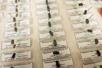 Collection de mouches de l'institut de recherche criminelle de la gendarmerie nationale. Les enquêteurs recourent systématiquement à l'entomologie criminelle pour aider à la datation d'un décès.