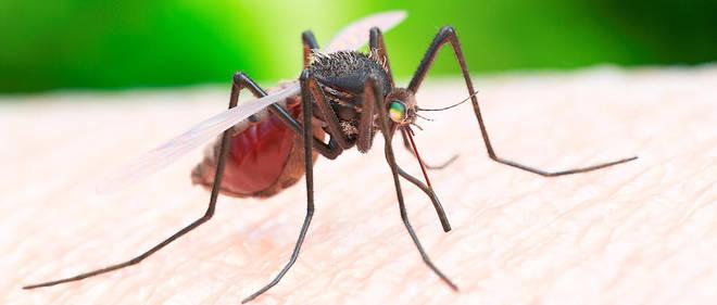 Aymeric Caron a répondu à l'épineuse question : « Que faire si l'on est antispéciste et que l'on est attaqué par des moustiques ? »