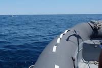 La zone fait partie du sanctuaire Pelagos, créé pour la protection des mammifères marins par Monaco, l'Italie et la France.