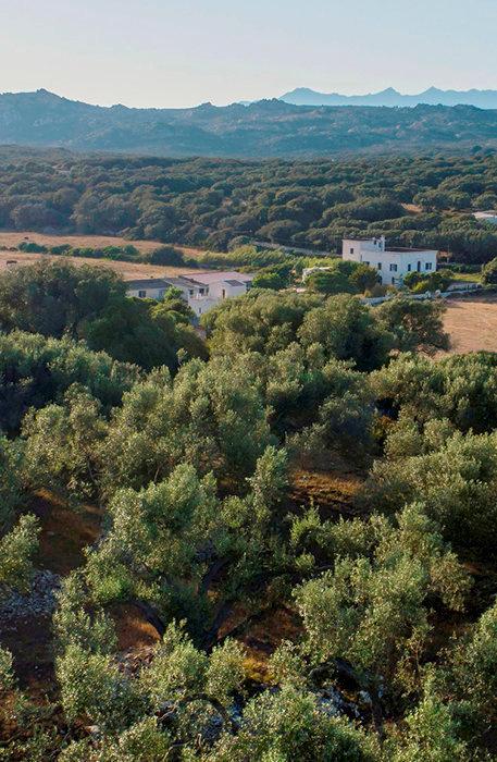 Unique. Les chambres d'hôtes proposées par Fabienne Maestracci se trouvent au cœur d'une vaste propriété entourée d'oliviers millénaires.