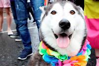 Des tests sanguins ont permis de decouvrir la bacterie et de comprendre que l'Americaine avait developpe une reaction rare apres que la salive de son chien est entree en contact avec une blessure.