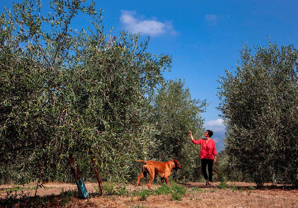 Les vies d'Emilie. Diplômée de la London School of Economics, engagée dans l'humanitaire, Emilie Borel a aussi été bergère avant  de concevoir son «rêve philosophique» de cultiver une oliveraie.