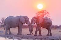 La population d'éléphants diminue drastiquement, les autorités luttent contre le braconnage (illustration).