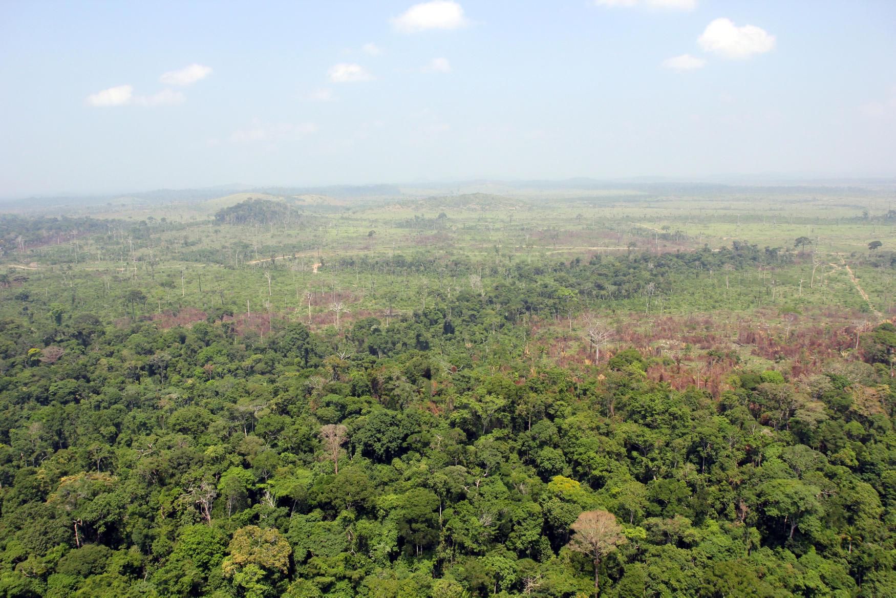 L'Amazonie, un territoire de 5,5 millions de kilomètres carrés, plus vaste que l'Union européenne.