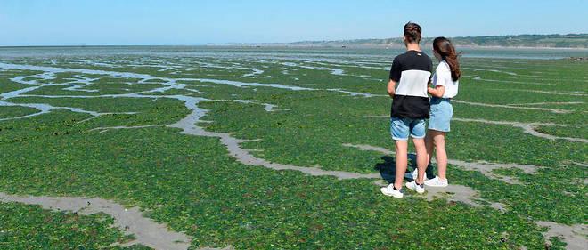Plusieurs plages de la commune d'Hillion ont été fermées pendant l'été en raison d'échouages importants d'algues vertes. Ici, la plage de Lermot le 4 juillet 2019.
