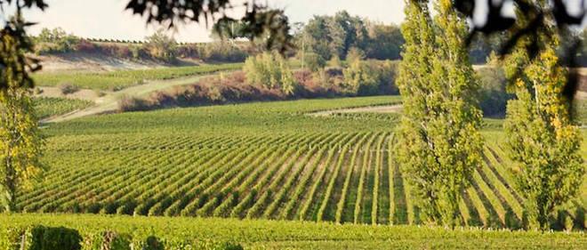 Les 7 et 8 septembre prochains, l'appellation Castillon-côtes-de-bordeaux ouvre ses portes afin de découvrir des nouveaux vins et ainsi prolonger son été.