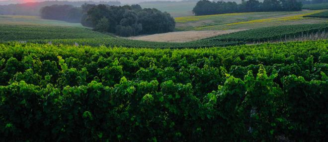 Le 14 septembre prochain aura lieu la première édition de Saint Mont, vignoble en course. Un trail épicurien à travers les vignobles de l'AOC Saint Mont.