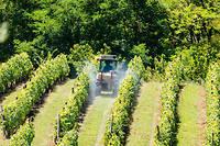 Des pesticides dans un vignoble français.