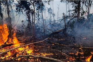 131600 incendies ont été comptabilisés depuis janvier en Amazonie.