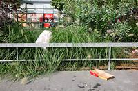 Des déchets jetés en pleine rue dans le 13e arrondissement.