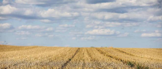 En 2019-2020, la production de céréales devrait s'établir à 2708 milliards de tonnes, soit 55,4 millions de tonnes de plus que le résultat de 2018.